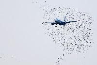 Autonomous drones can herd birds away from airports