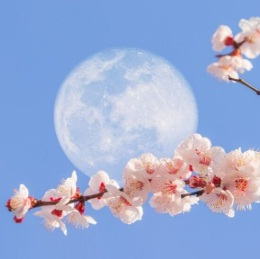 "Last Full Supermoon of 2020 on 7th May ""Super Flower Moon"""